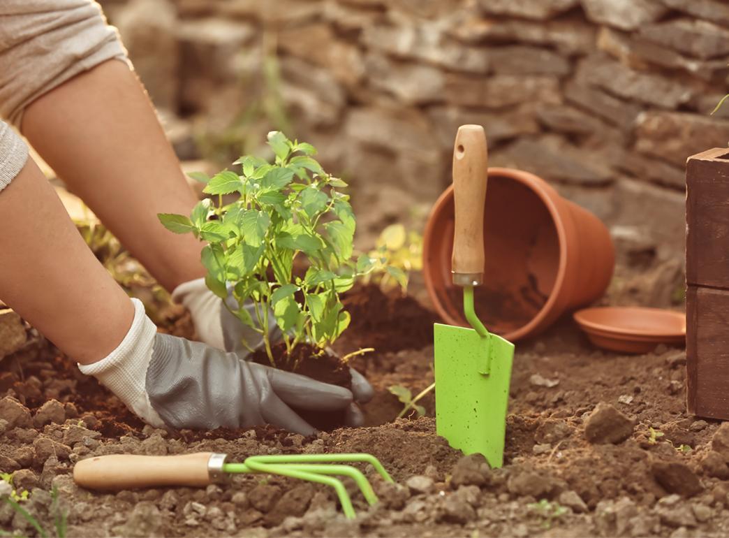 植物の育て方